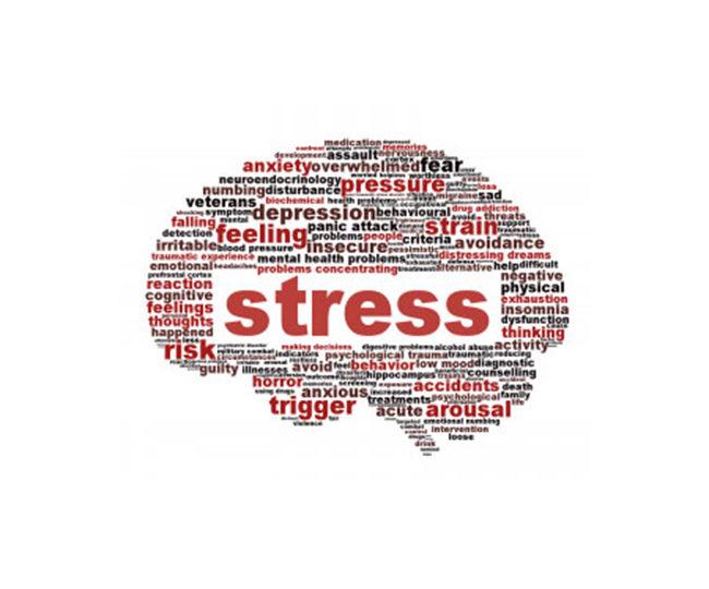 Estrés y Reproducción